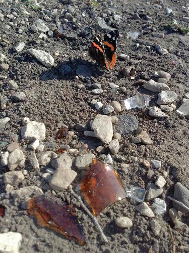 Butterflyaroya