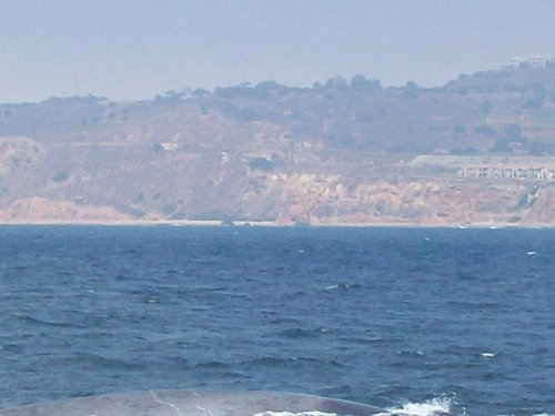 Whale_back_and_ca_coast